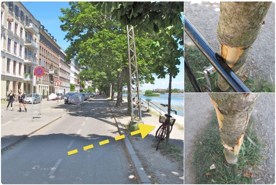 Šis ir iemesls, kādēļ pie kokiem obligāti būtu uzstādāmas velonovietnes.